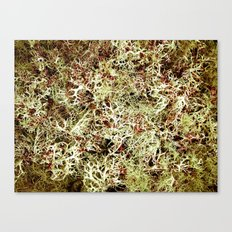 Moss Bed Canvas Print