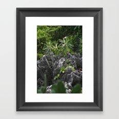 Cayman Plants Framed Art Print