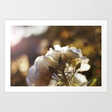 Flower Art Print - White, Peach, Yellow Print - Shabby Chic Wall Art - Home Decor -