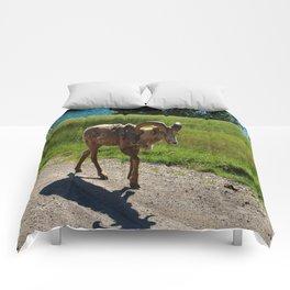 Bighorn Sheep - Banff National Park Comforters