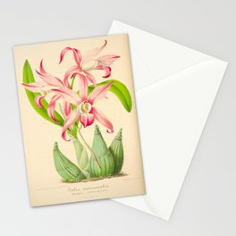 LAELIA AUTUMNALIS Vintage Botanical Floral Flower Plant Scientific Illustration Stationery Cards