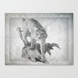 Bobcat in the Woods Canvas Print