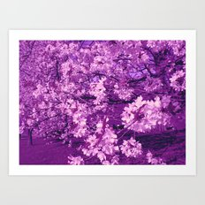 cherry flowers Art Print