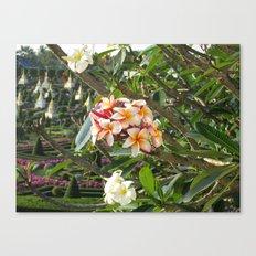 rosa Frangipane Canvas Print