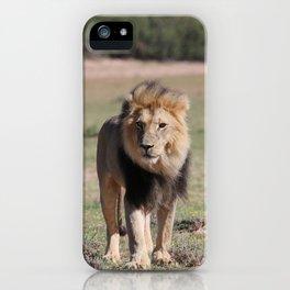 Kalahari Lion King iPhone Case
