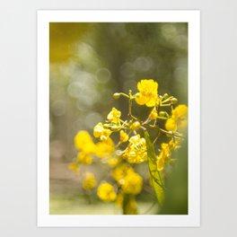 Popcorn Flower Bokeh Delight Art Print