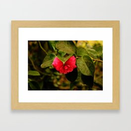Early Pink Flower Blooms as Snow Flake settles on top Framed Art Print