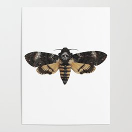 Moth of life Poster