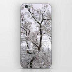 Winter Tree iPhone & iPod Skin