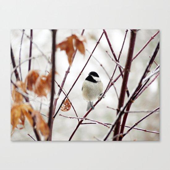 Chicka Chickadee Canvas Print
