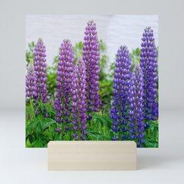 Lupinus Mini Art Print
