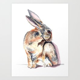 Cottontail Rabbit Art Print