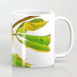 Louisiana Water Thrush Bird Coffee Mug