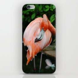 Pink Flamingo iPhone Skin