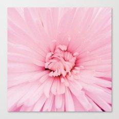 Chrysanthemum heart Canvas Print
