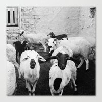 morrocan Canvas Prints featuring Sheep in Morrocan desert (black & white) by Hanke Arkenbout