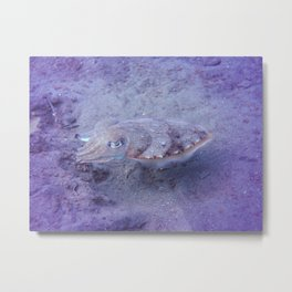 Magic cuttlefish Metal Print