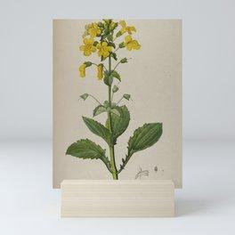 Vintage Botanical Print - Seep Monkeyflower, 1813 Mini Art Print
