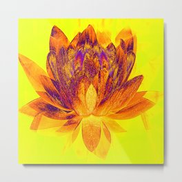 Early morning Lotus.... Metal Print