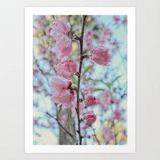 Soft Pink Cherry Blossom Flowers Art Print