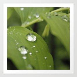 Green Leaves After Rain Art Print