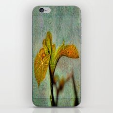 Yellow Iris iPhone & iPod Skin