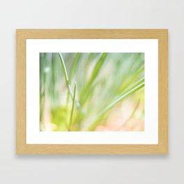Dreamy  Herbs Chives Framed Art Print