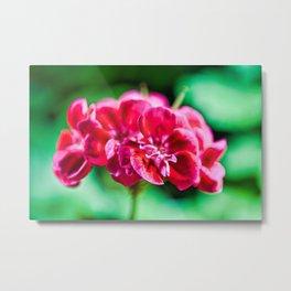 Single Pink Flower Closeup Metal Print