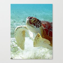 Watercolor Green Turtle Greeting Canvas Print
