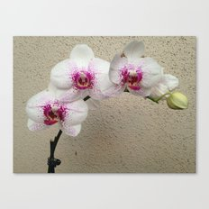Arch de Orchid Canvas Print