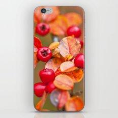 Autumnal Cotoneaster 9379 iPhone & iPod Skin