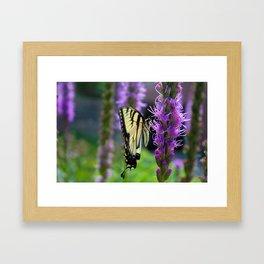 Swallowtail Summer Framed Art Print
