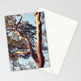 Winding tree I Magic hour I Nature I Vintage film photography Stationery Cards