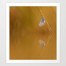 Blue butterfly reflection Art Print
