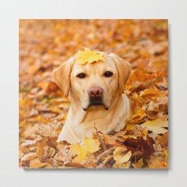 Labrador Retriever Dog 151 Metal Print