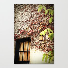 Window and Ivy Canvas Print
