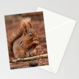 Nature woodland animals Red squirrel by a log Stationery Cards
