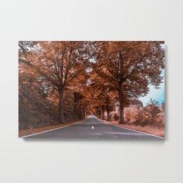 Tree-lined avenue through Thuringia Metal Print
