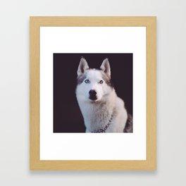 Leader of the pack. Framed Art Print