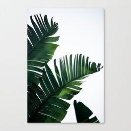 Palm Leaves 16 Canvas Print
