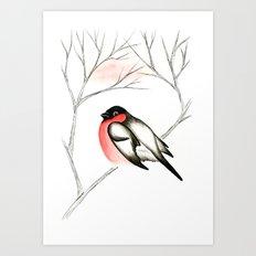 Eurasian Bullfinch (Снегирь) Art Print