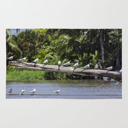 Royal terns on a log in river estuary - Costa Rica Rug