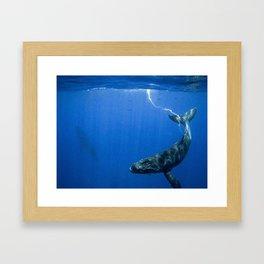 Underwater Humpbacks 14 Framed Art Print