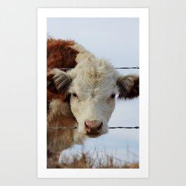 Baby Calf in Fallbrook, CA Art Print