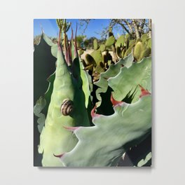 Snail in the San Diego Cactus Garden Metal Print
