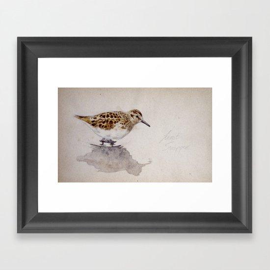 Least Sandpiper Framed Art Print
