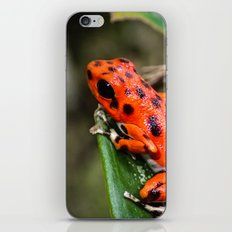 Red Frog iPhone & iPod Skin