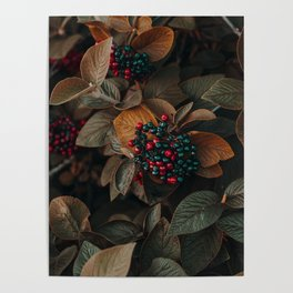 Fruit and Nature Poster