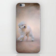 On the Go - Bichon Frise iPhone & iPod Skin