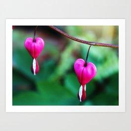 Two Hearts, Bleeding Hearts Flowers Art Print